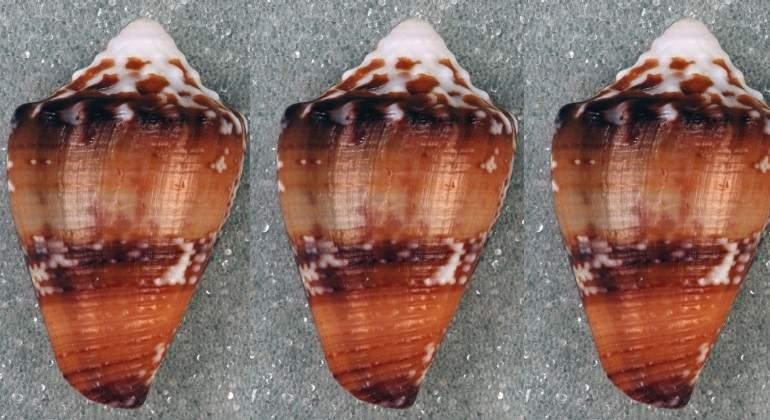 Un compuesto del caracol marino, alternativa a los adictivos opiáceos