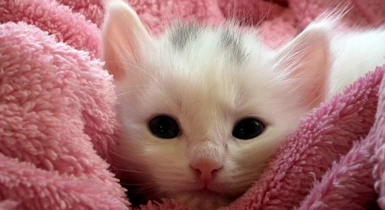 ¿Sientes la necesidad de abrazar a este gato? Conoce el motivo