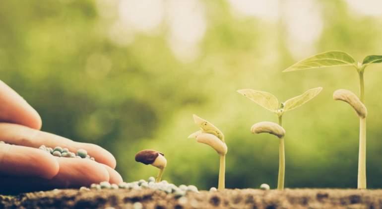 agricultura-semilla-planta-dreams.jpg