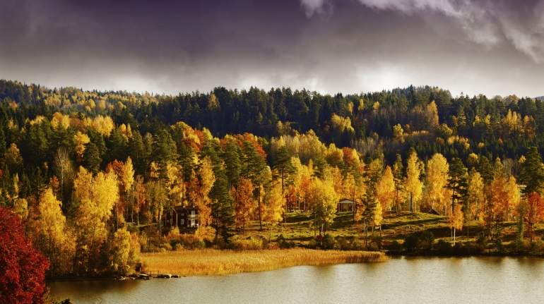 bosques-suecia.jpg