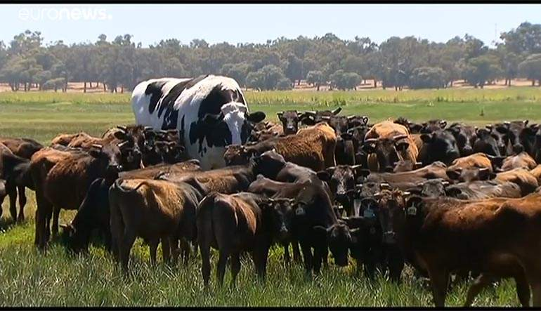 vaca-gigante.jpg
