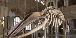 Museo Nacional de Historia Natural es el preferido con récord de visitantes