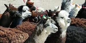 El Altiplano Andino chileno se sube al carro de la innovación