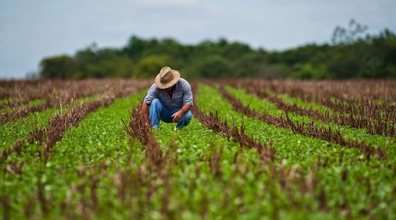 Agro impulsaría el crecimiento de las exportaciones totales en 2,4% para este año