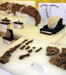 restos-prehistoricos.jpg
