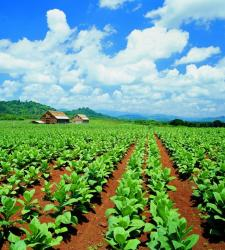 plantacion2.JPG
